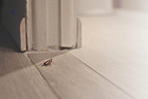 Cómo eliminar las cucarachas de tu hogar para siempre