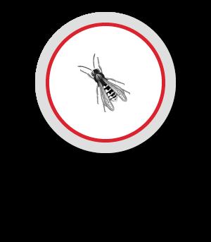 buscador de insectos de avispas de oro brand
