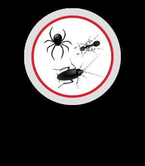 buscador de insectos de cucarachas y hormigas de oro brand